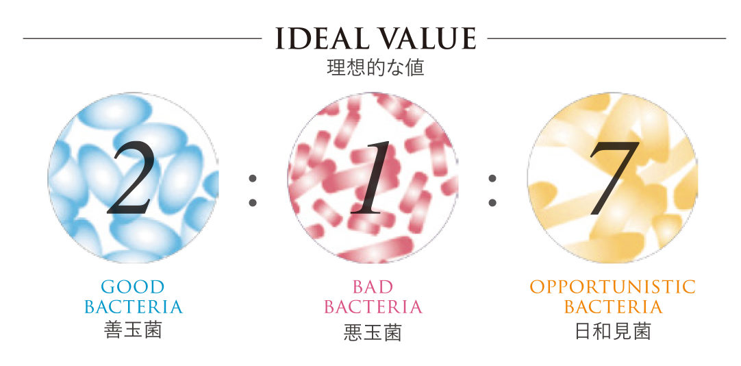腸内細菌の理想的値